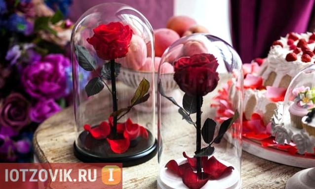 Роза в колбе отзывы покупателей