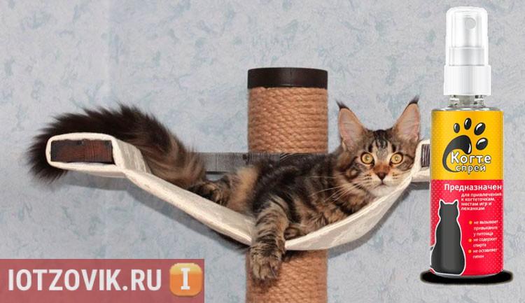 приучение кошки к месту