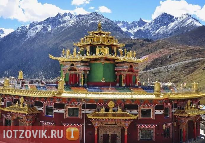 тибетский сбор на трафах от паразитов
