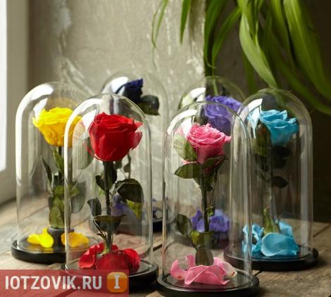 вечная роза в стеклянной колбе