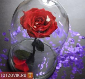 Роза в колбе реальные отзывы