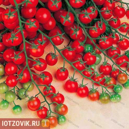 семена томатов с алиэкспресс