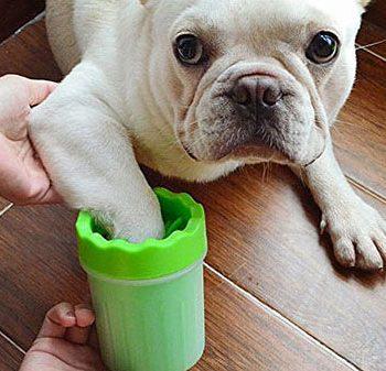 как помыть собаке ноги?
