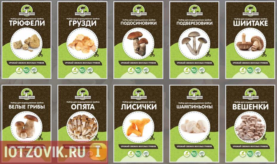 виды грибов в грибном наборе для выращивания