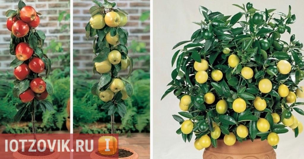 мини плодовые деревья отзывы