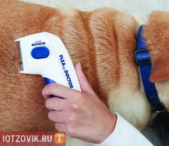 эффективное средство от блох у собак